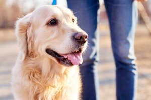 Taking Care of Your Dog in an Eco-Friendly Way