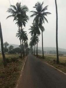 Tree in Goa